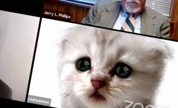 """""""No soy un gato"""": el cómico momento que protagonizó un abogado con un filtro de Zoom"""